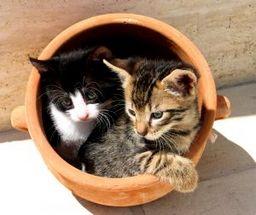 【携帯で学ぶ】猫の気持ち,猫の病気,猫雑学
